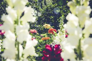 yorktown-flowers.jpg